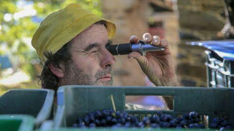 Un bodeguero mide el contenido de azúcares de la uva mediante un refractómetro