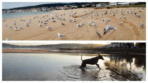 Playa de Coroso, en Ribeira. Arriba, en bajamar; en la parte inferior, en pleamar