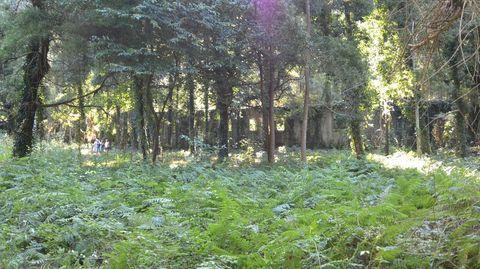 El lazareto, entre los árboles