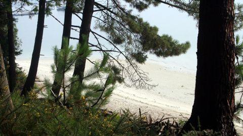 La playa desde el pinar