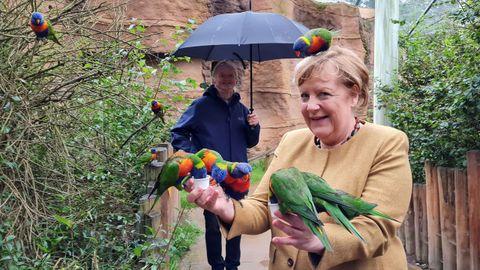 Merkel, alimentando a loros arcoíris en un parque de aves en Marlow (Alemania)