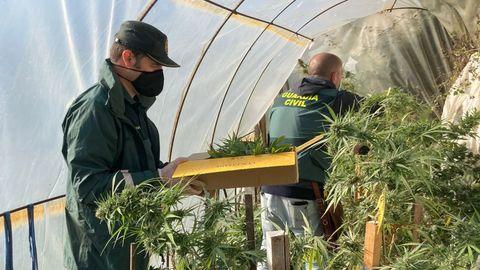 Intervención de la Guardia Civil para incautar la marihuana