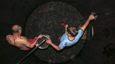 Pisado de la uva al estilo tradicional y en una cuba de madera en Adega Guímaro