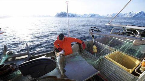 Imagen de archivo de pesca de bacalao