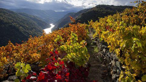 Las jornadas abiertas de la Ruta do Viño llegarán a la Ribeira Sacra este fin de semana.
