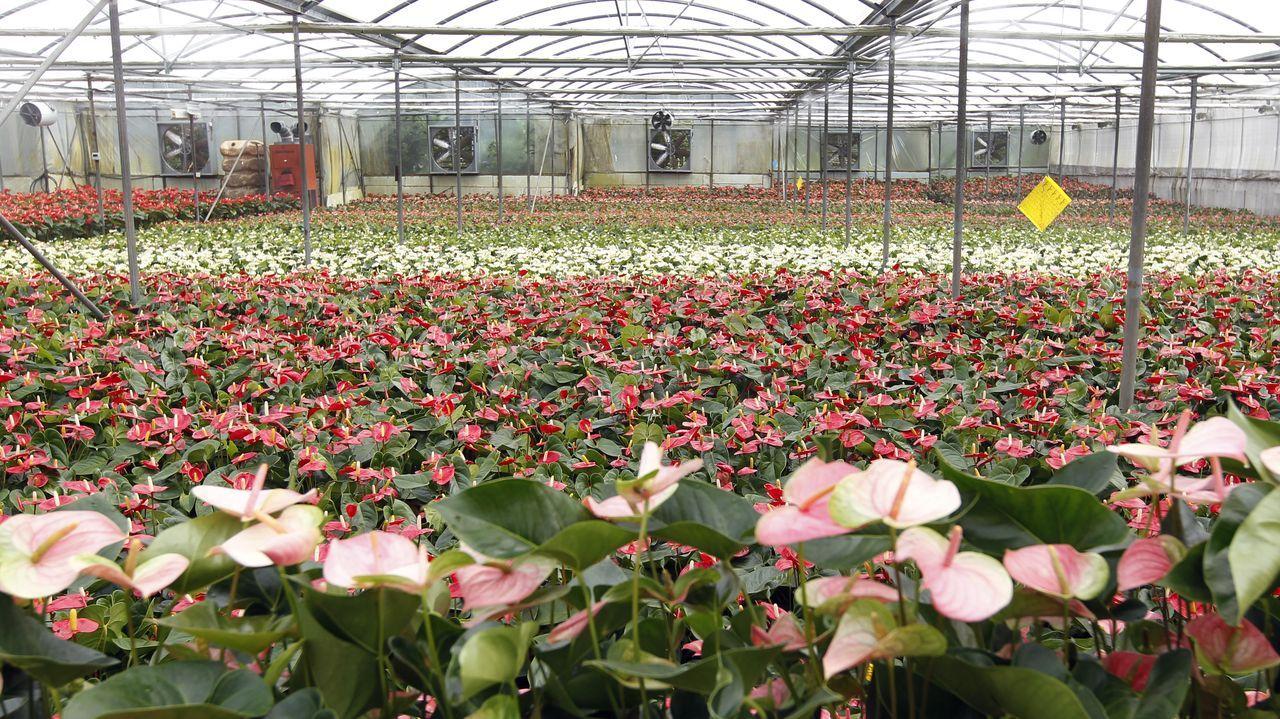 Somos agro, viveros de plantas en Tomiño.El quinto es el magnate del acero Lakshmi Mittal con unos 21.034 millones de euros.