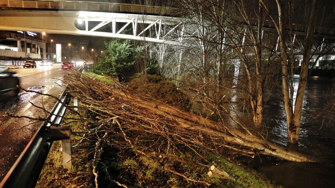 Caída de un árbol en la N-120