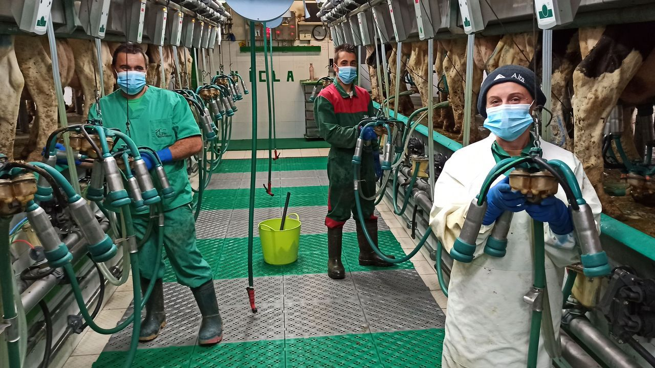 Agricultores de Mazaricos trabajan en la campaña de forraje en Castilla.La SAT Busto-Corzón es una de las mayores y más modernas explotaciones lácteas de Galicia