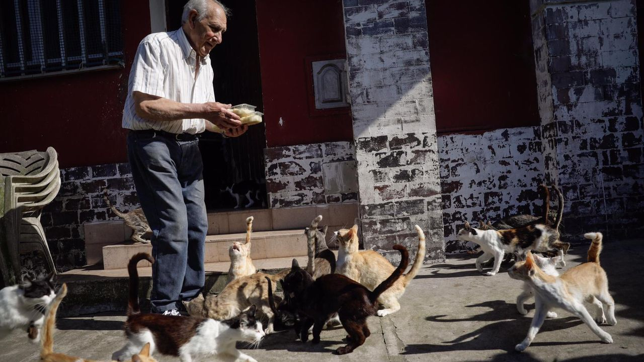 La colonia felina de Simeón Ziquete.Imagen de archivo del Chuac durante la pandemia del coronavirus