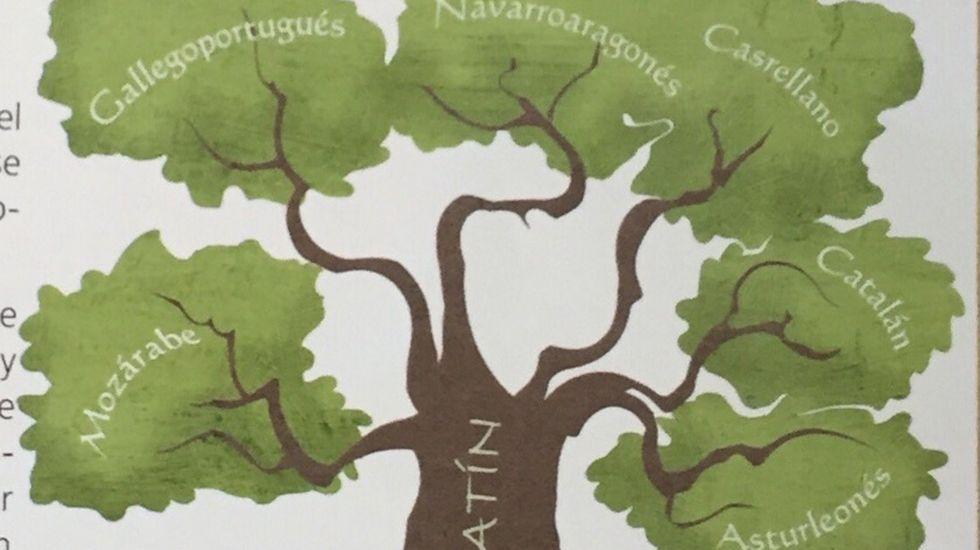Libro de lengua en Asturias (Oxford)