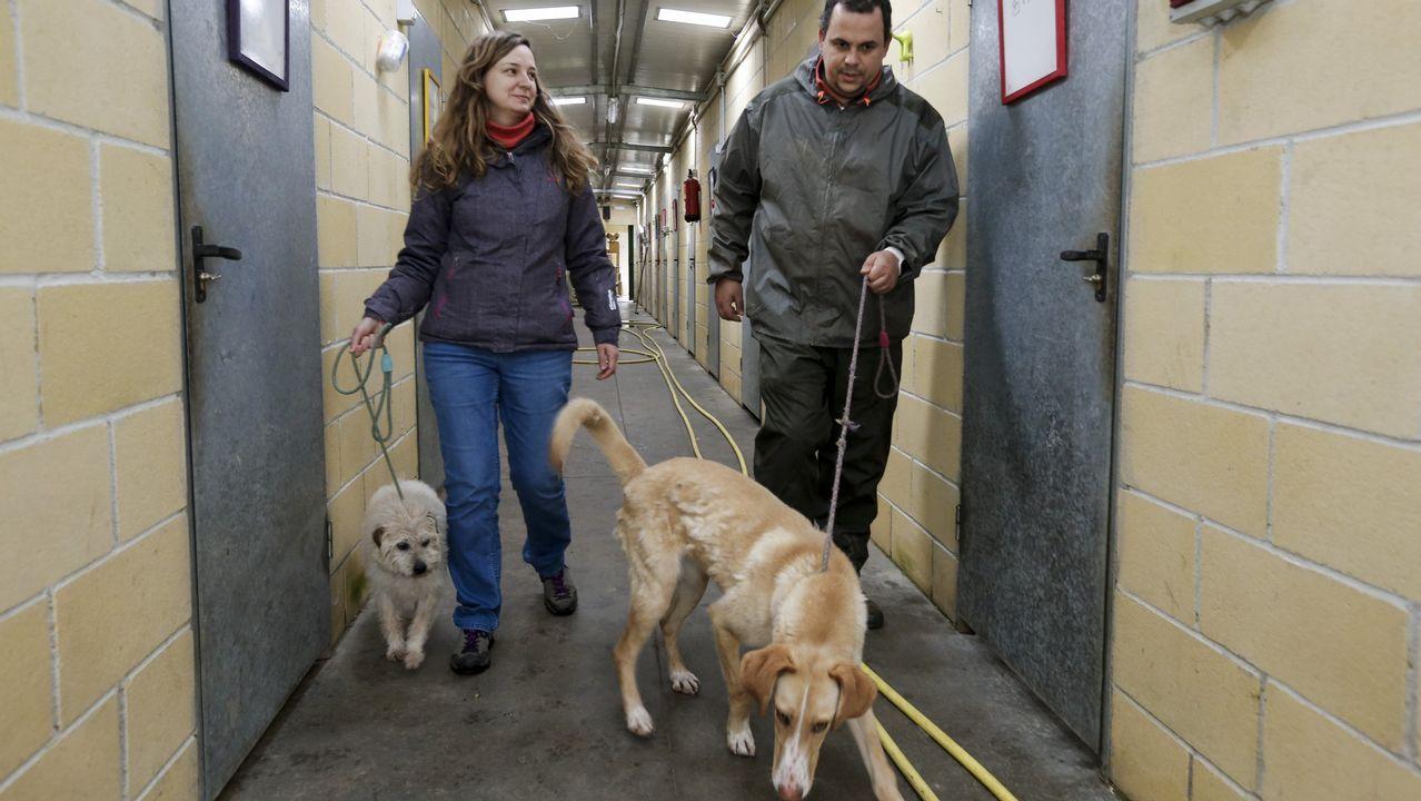 Outeiro de Rei, desbordado por el creciente abandono de perros
