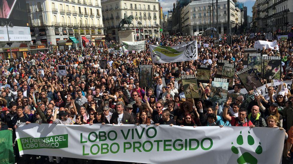 Miles de personas se manifiestan en defensa del lobo ibérico.Contenedores de reciclaje en Gijón