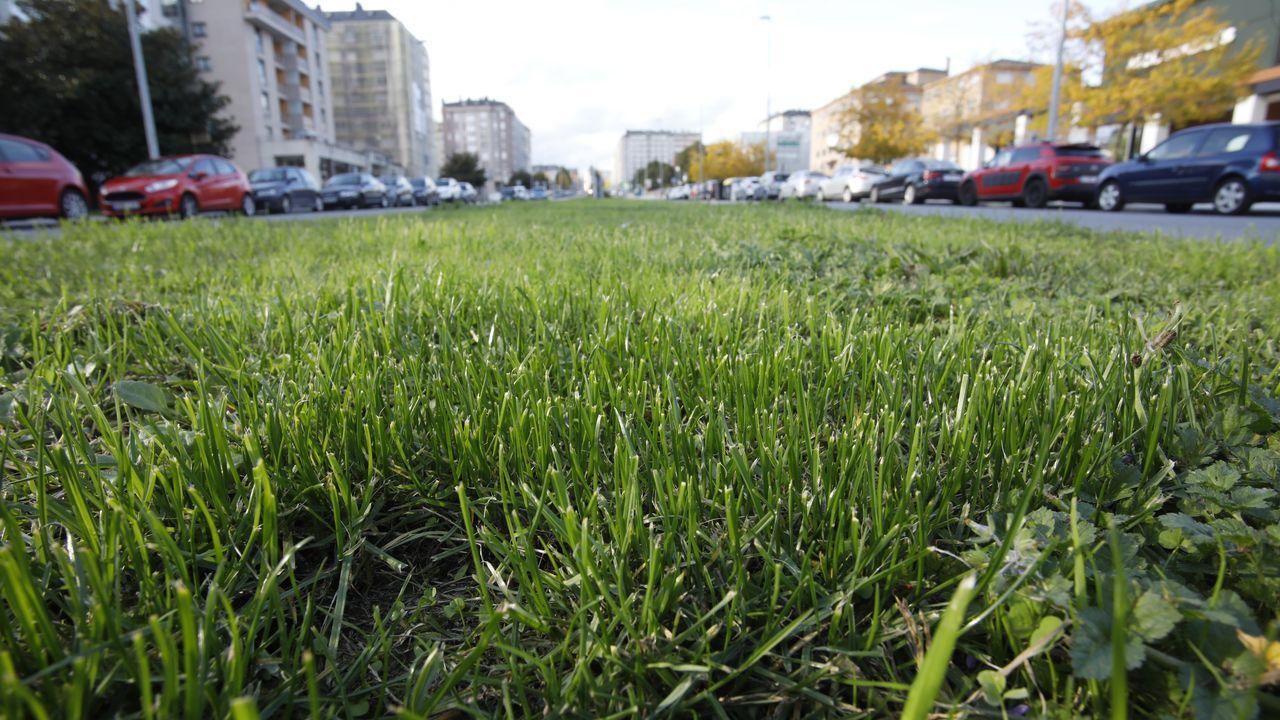 La hierba de espacios públicos (en  la imagen, mediana de la avenida de Madrid, en Lugo) es materia prima que puede usarse para la obtención de biogás o de biometano