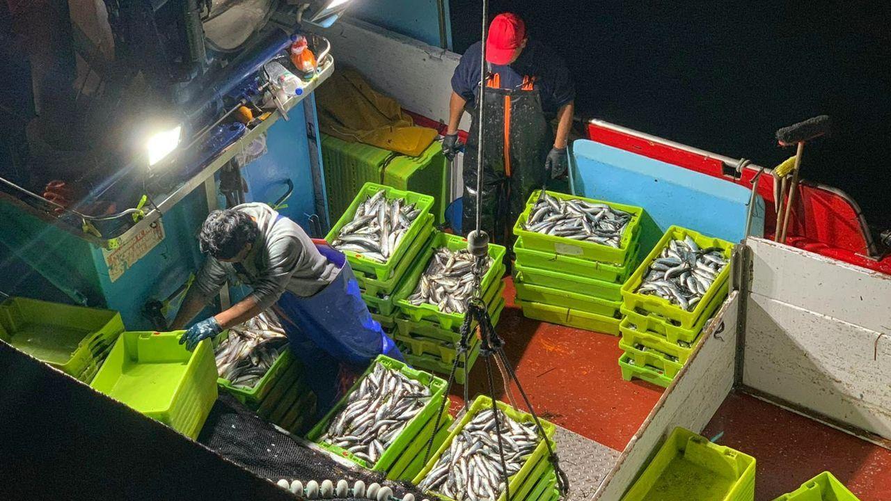 Un barco gallego descargando sardina, en una imagen de archivo