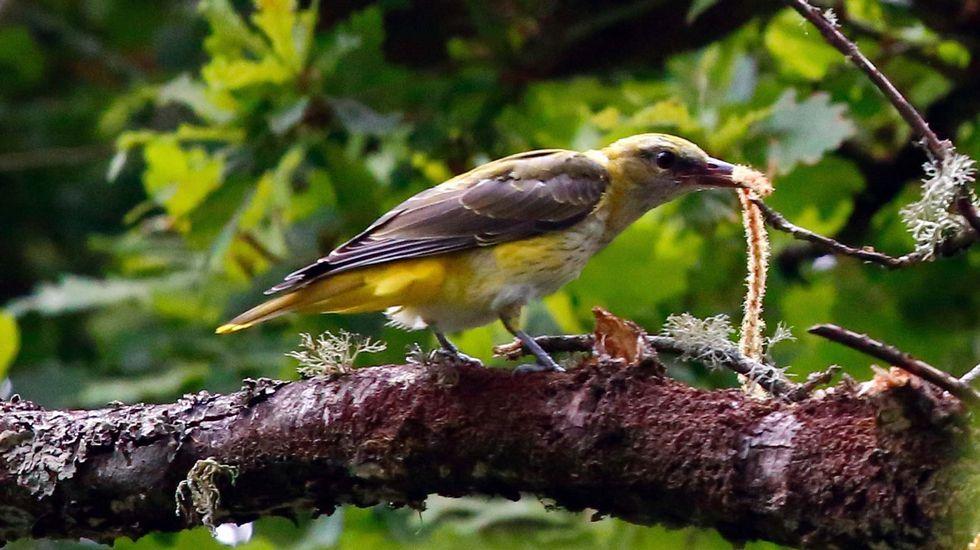 A beleza ornitolóxica do Miño