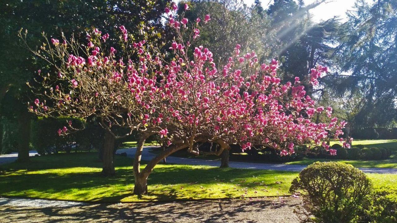 Magnolia del jardín del museo Evaristo Valle