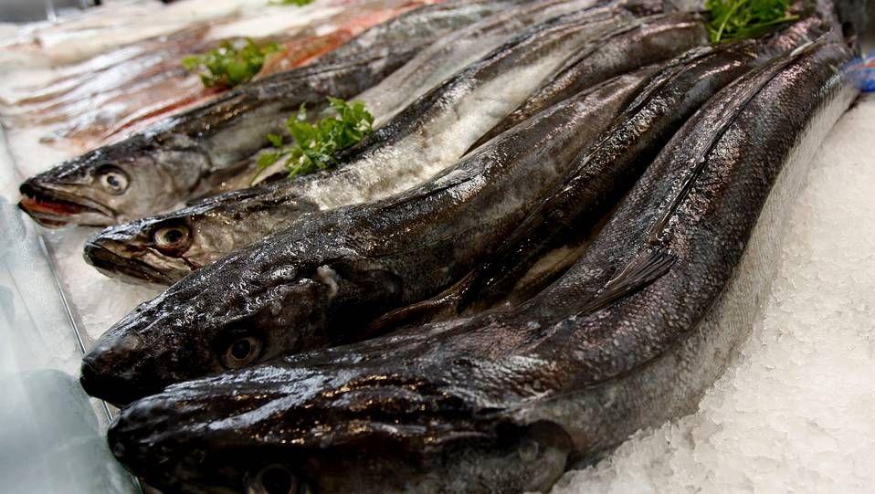 La merluza es el principal sustento económico de la pesca gallega. La de aquí es de la variedad «merluccius merluccius».