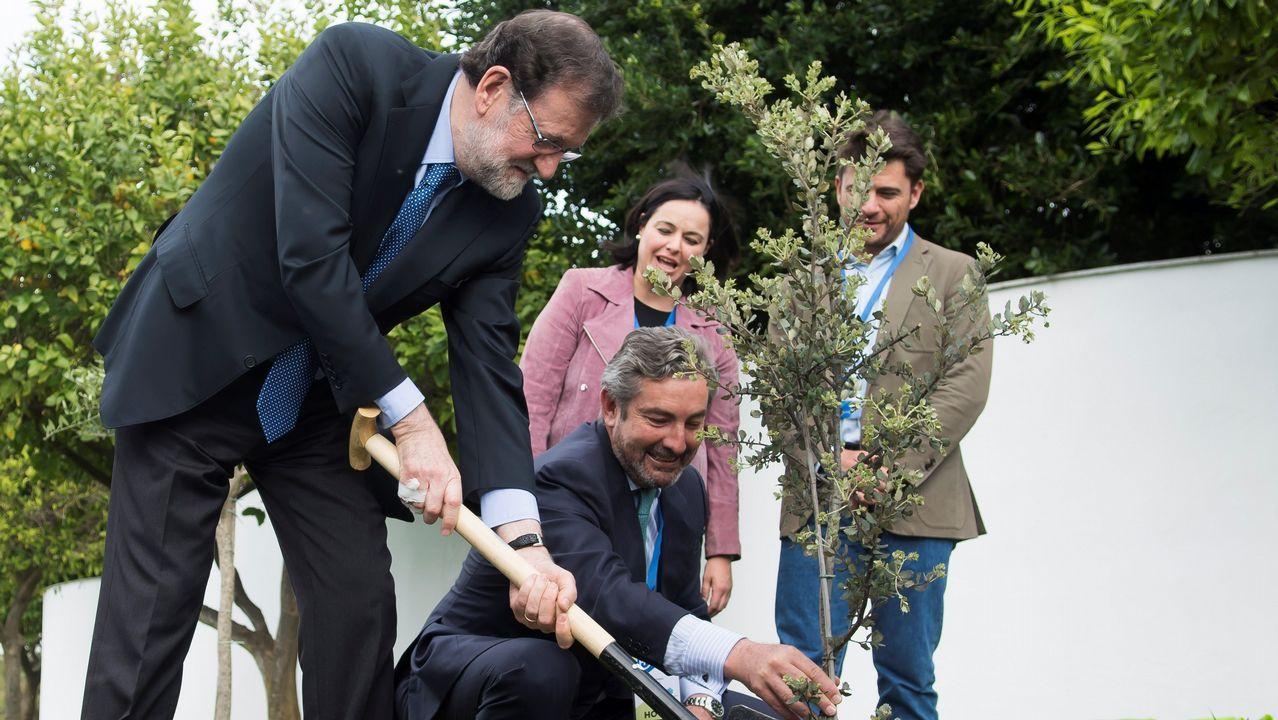 Rajoy: «Manifiesto mi apoyo y el del PP a la presidenta de la Comunidad de Madrid».Rajoy plantó, en el jardín del hotel que acoge la convención, una encina. Un árbol «muy duro, bonito y español»