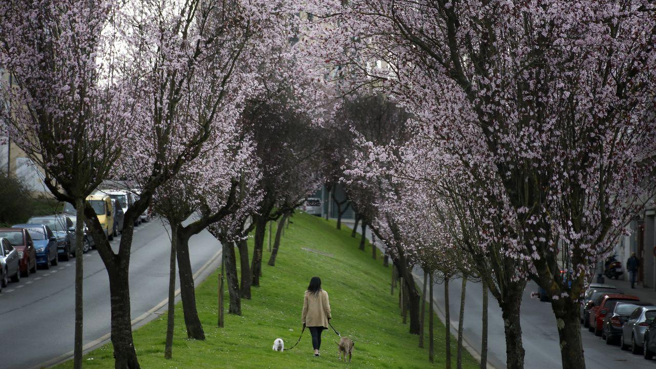 Los árboles florecen en Lugo en pleno febrero.López Somoza delante de las instalaciones que tiene Gasóleos Verín en A Louzaneta