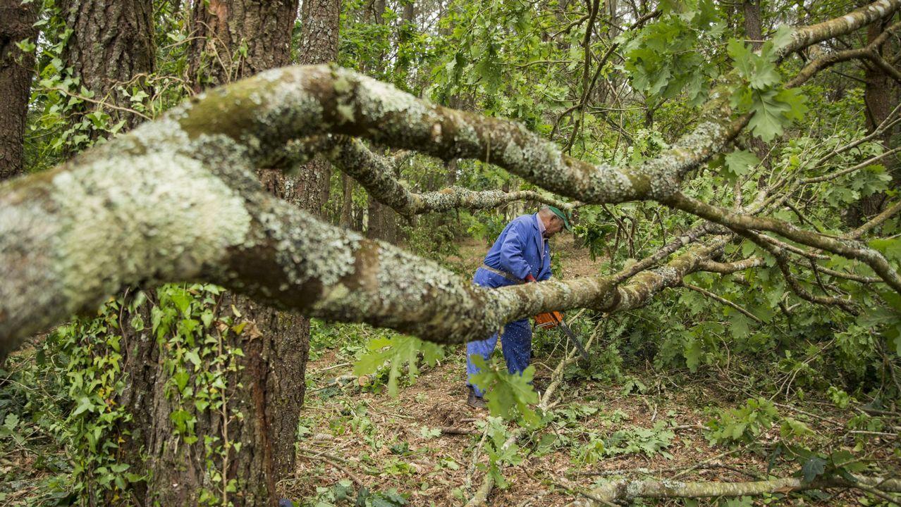 Así está la A-6 en el límite de Galicia.Un vecino de Vimianzo talando un árbol