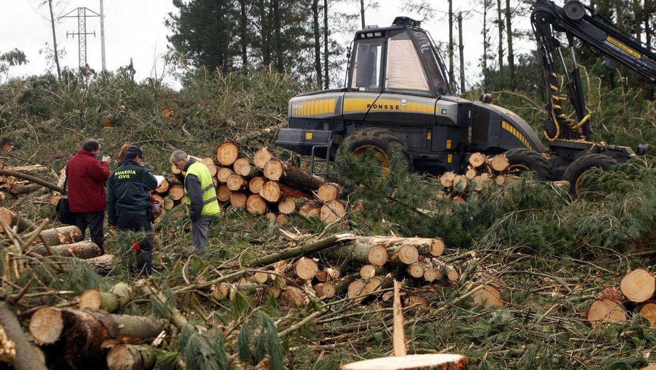 Accidente mortal durante una tala de pinos en Taboada