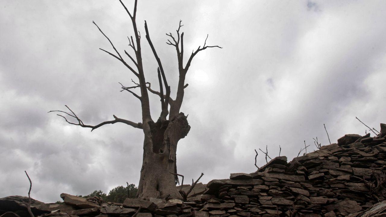 Base de las brigadas forestales en Tineo