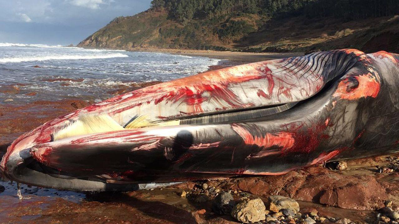 Aparece una ballena muerta en Arenal de Morís.El barco Aquarius en una imagen de archivo
