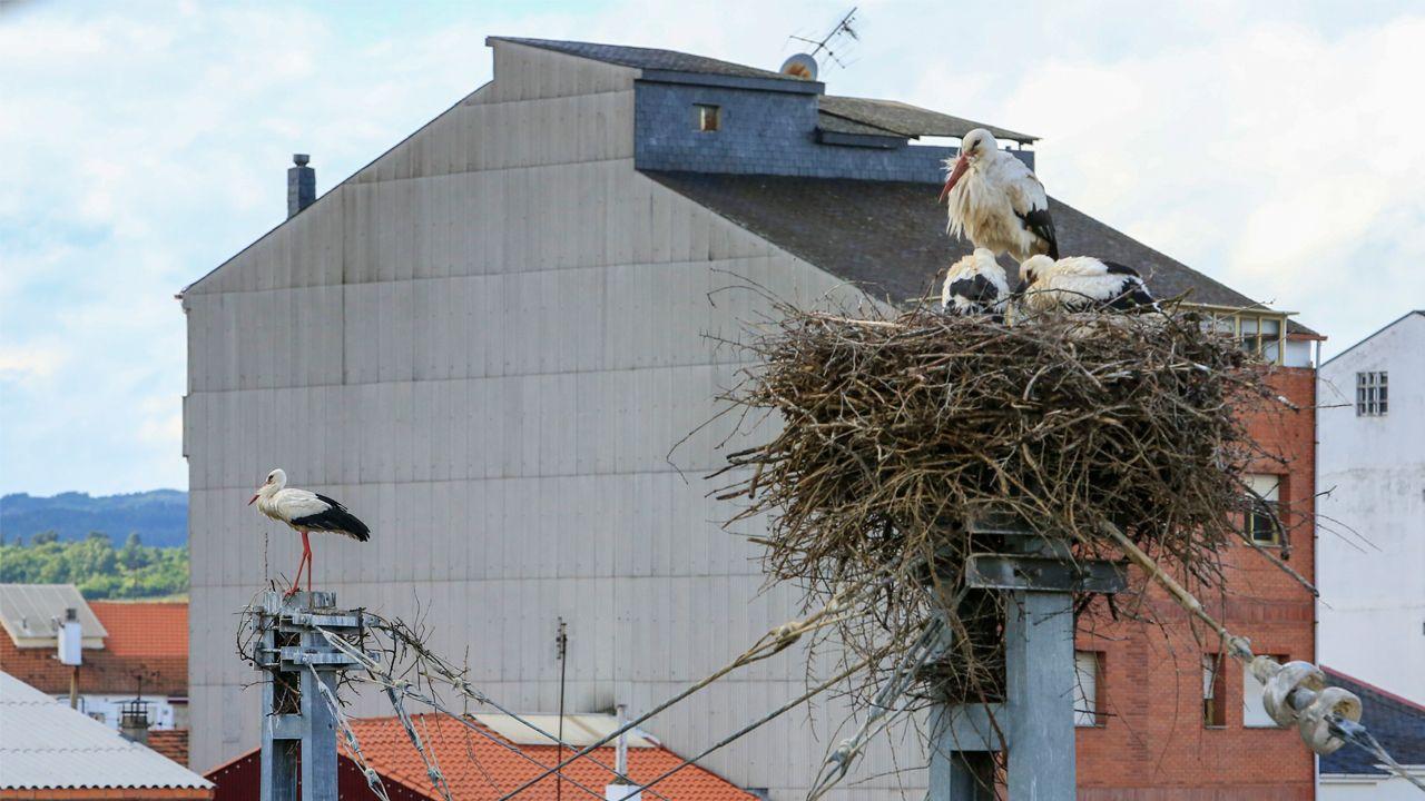 El viento tiró en Monforte varios nidos de cigüeña en las catenarias de la vía de ferrocarril