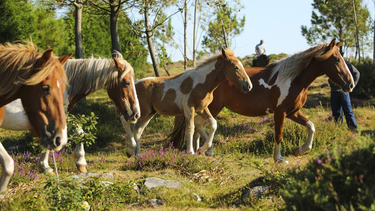 La asociación Monte Faro logra salvar la única cabaña equina libre de la comarca