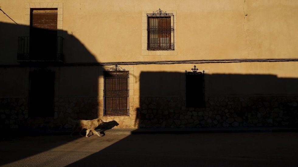 Pasión por El Bosco.EL TOBOSO.  Un perro vagabundea por las calles vacías del pueblo del que era oriunda Dulcinea, la amada de don Quijote, El Toboso (Toledo), un típico ejemplo manchego de este declive rural que indaga Sergio del Molino -retratado en la fotografía inferior- en su ensayo «La España vacía».