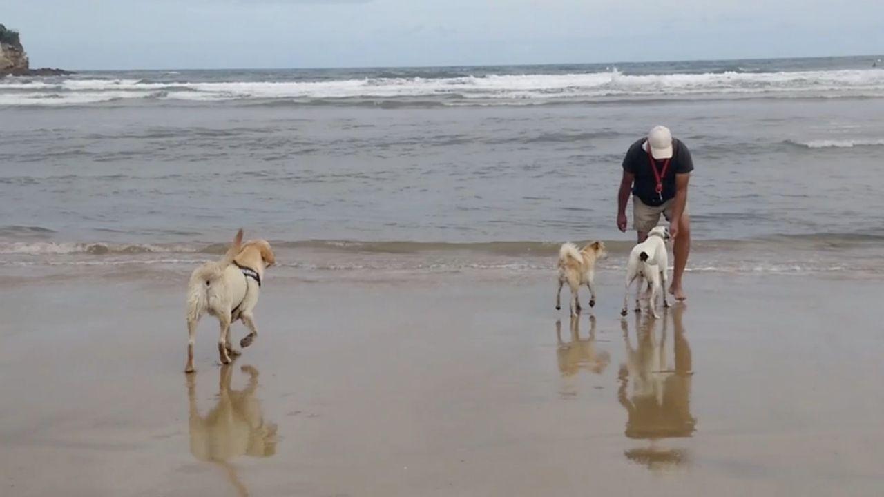 Perros en la playa de San Lorenzo de Gijón.Perros en la playa de San Lorenzo de Gijón