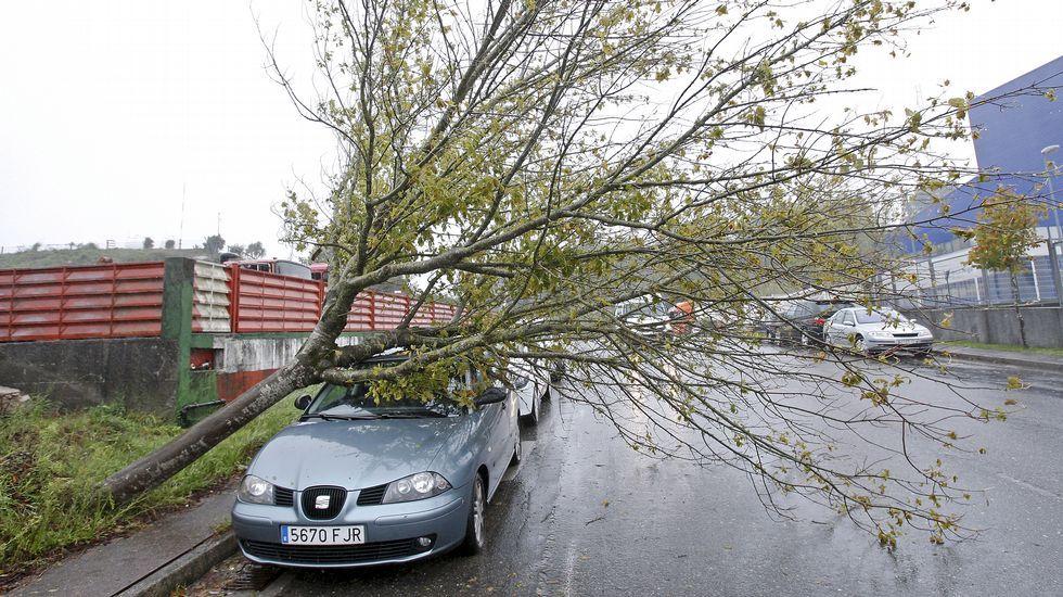 Un coche afectadopor la caída de un árbol en Pontevedra.