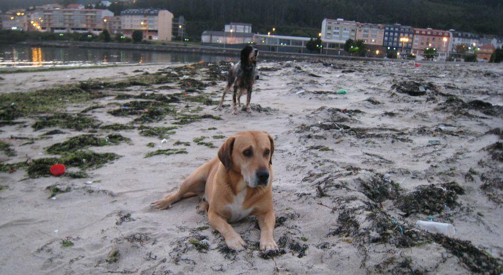 La playa de A Concha de Cee estaba ayer por la tarde completamente llena de basura.