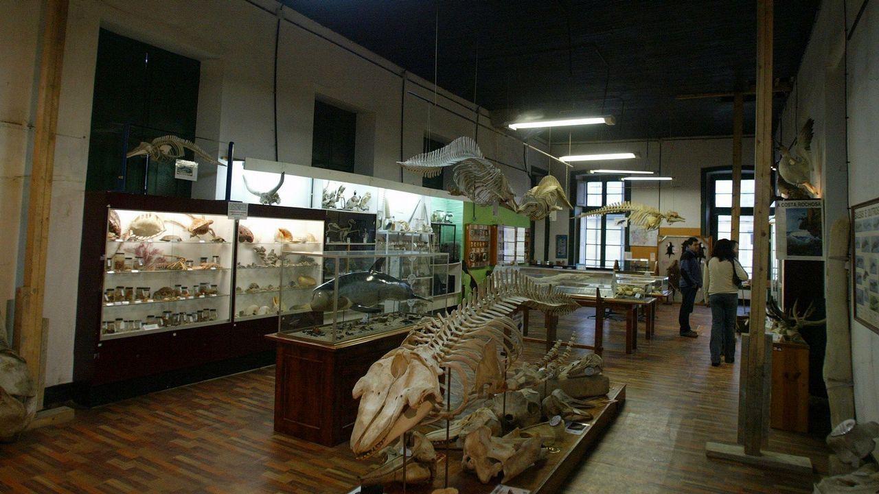 En los años 80 y 90, la SGHN tuvo su sede en el Antiguo Hospicio, donde solo contaba con 90 metros cuadrados de exposición frente a los 500 de los que dispone ahora el Museo da Natureza de la Casa do Coronel