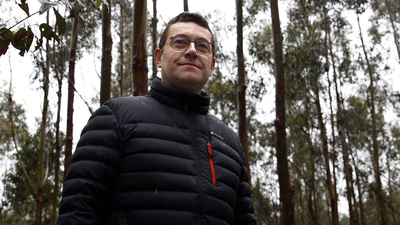 El ingeniero Ricardo Quiroga en uno de los pinares donde realizó el estudio en Campo Lameiro