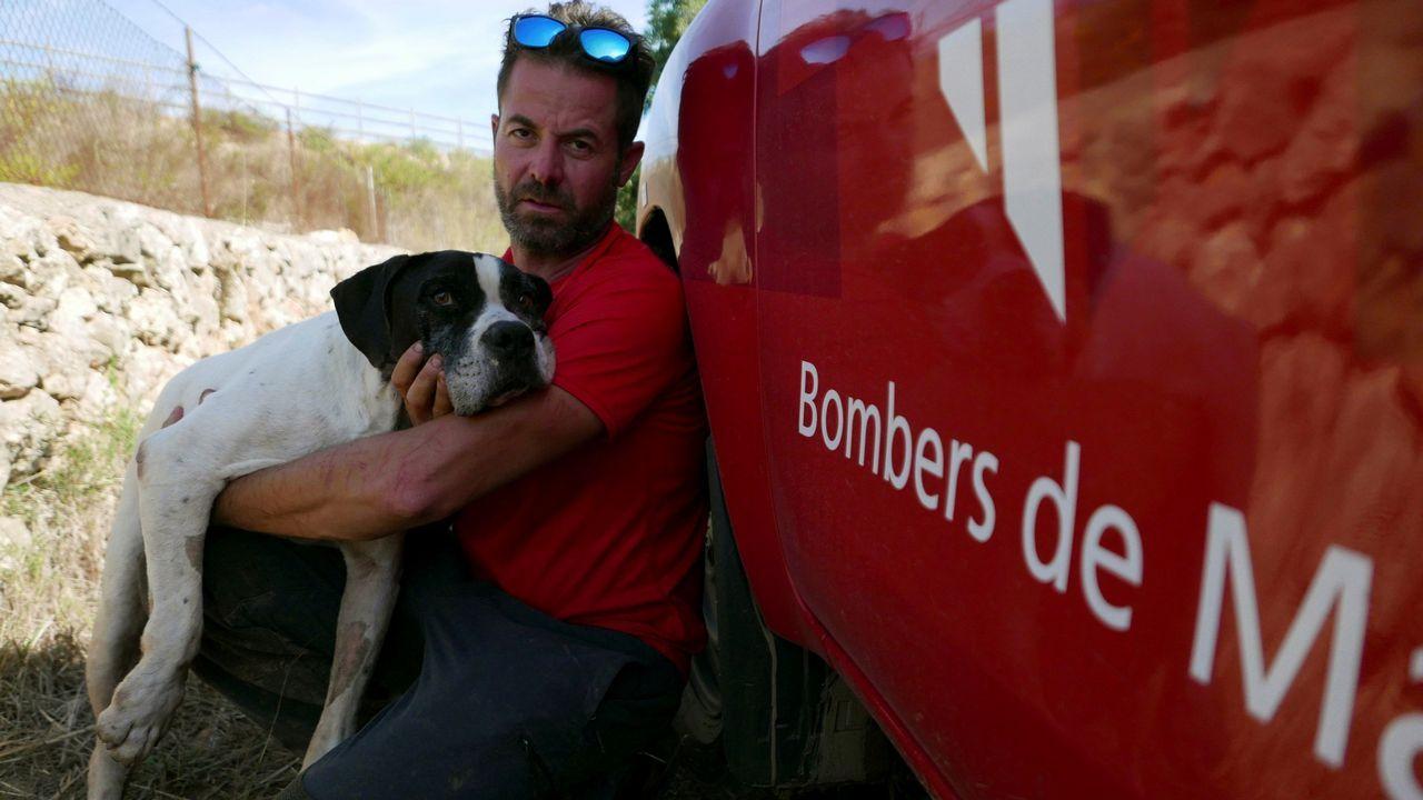 Perry, uno de los perros que buscan al pequeño Artur, desaparecido en las riadas de Mallorca