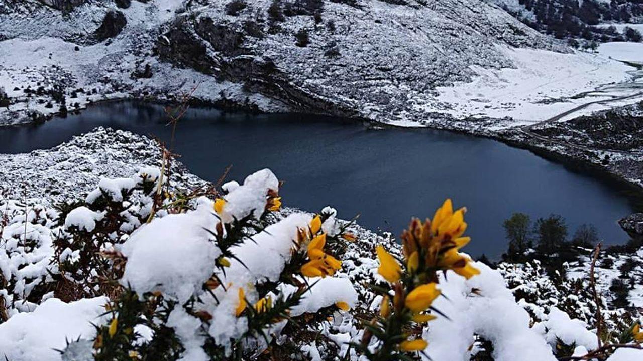 Un grupo de pescadores recoge el «campanu» del Sella, el segundo del día, capturado por Juan Antonio González, el «sastrín», en el Barcu de Arriondas..Los lagos de Covadonga cubiertos por la nieve