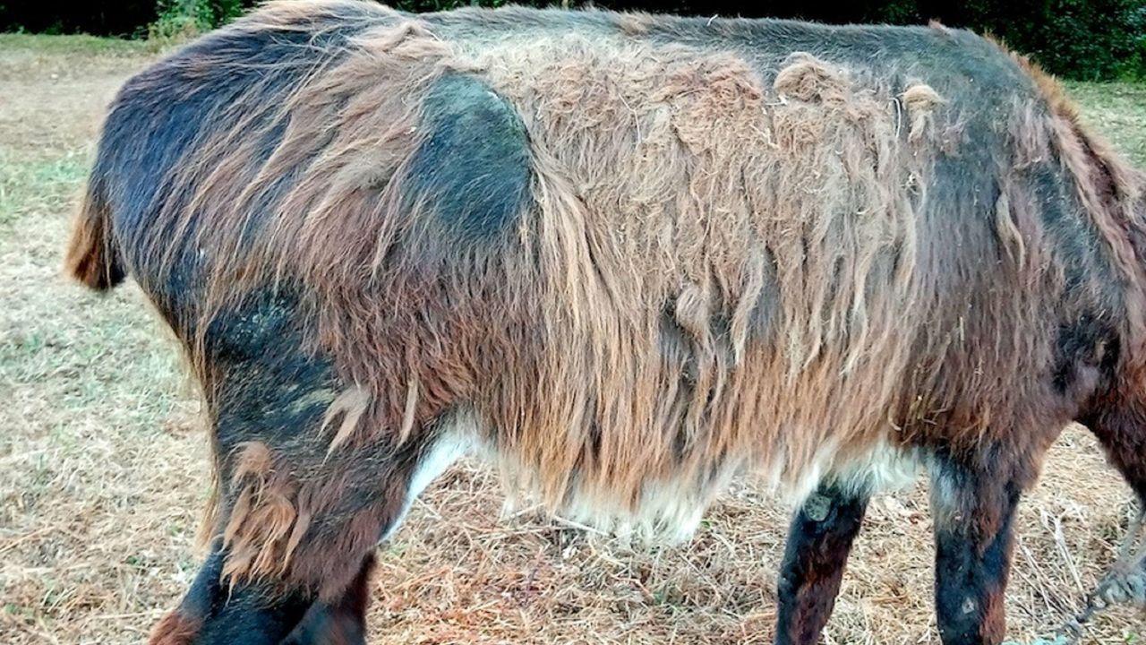 Una veintena de ovejas muertas en una finca de Llanes.Los residentes del inmueble llevan años denunciando mal olor en el piso