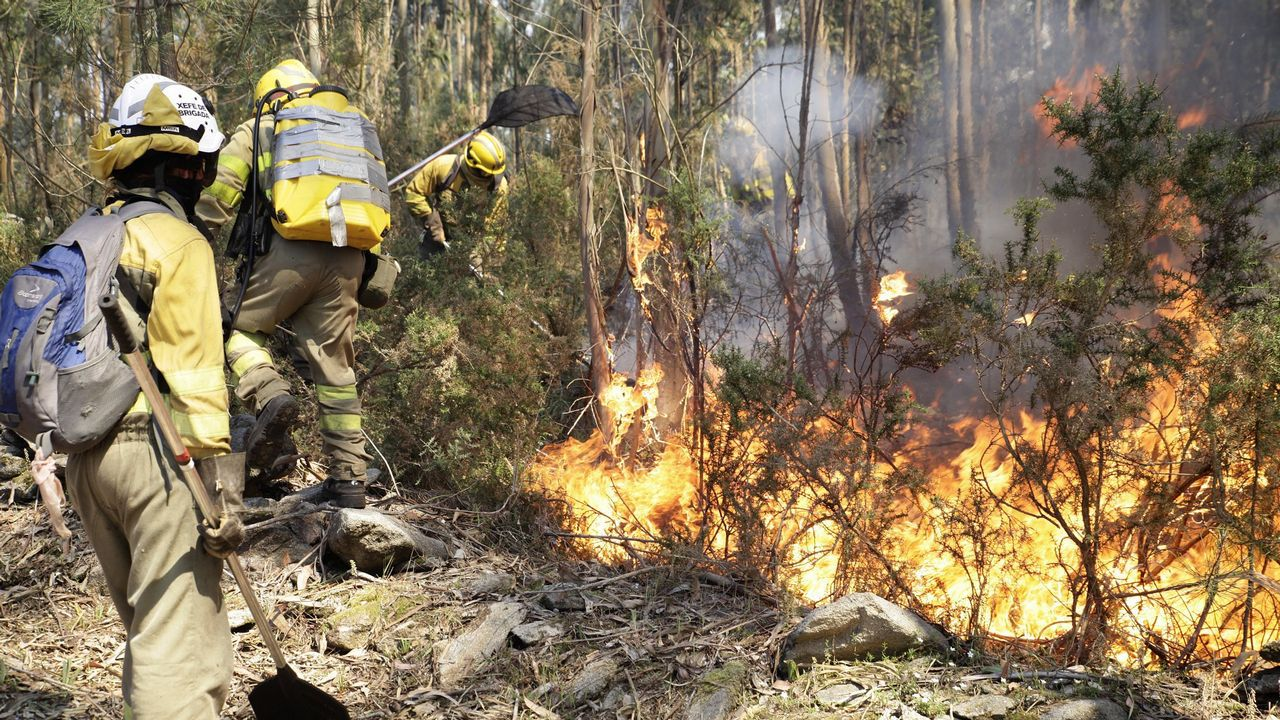 Medio Ambiente cubre con paja la superficie quemada de Ancares