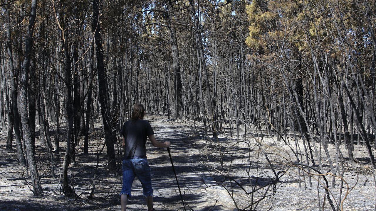 Imagen que deja el incendio que asoló Monforte y Pantón