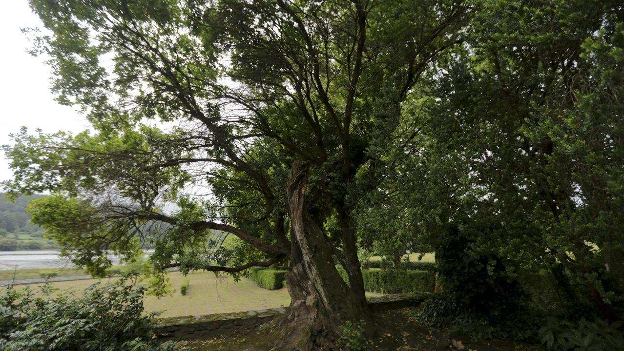 En Mariñán hay fresnos, cipreses de Portugal, tejos, camelias, magnolias o tilos. También el madroño (érbedo en gallego) más alto de Galicia. Llegó a medir 16 metros, hoy está cerca de volver a alcanzar esta altura