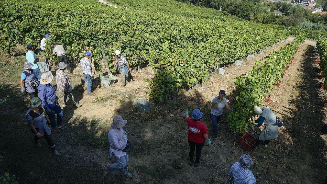 Lo que se cuece estos días en las bodegas de Ribeira Sacra.Estantes reservados para los tintos de la ribera del Sil en el Centro do Viño da Ribeira Sacra