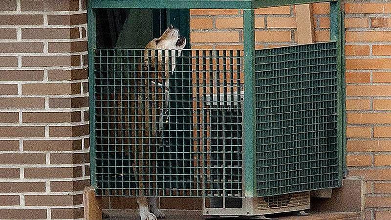España es el país de Europa que más abandona a sus mascotas.Protesta de esta mañana en Lugo