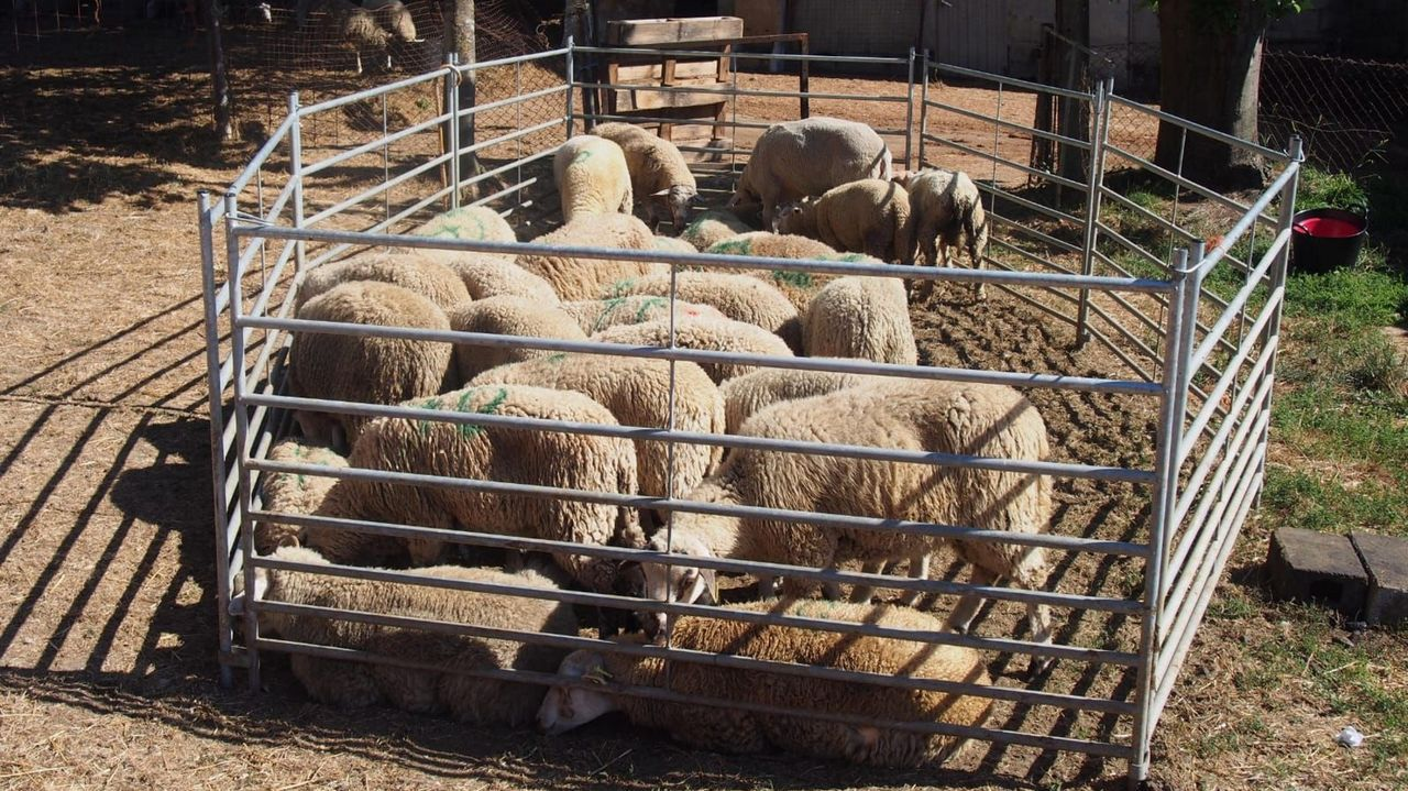 Teresa Simval, ganadera de pastoreo.Exterior de la planta de Lactalis en Vilalba, situada en la parroquia de Sancovade