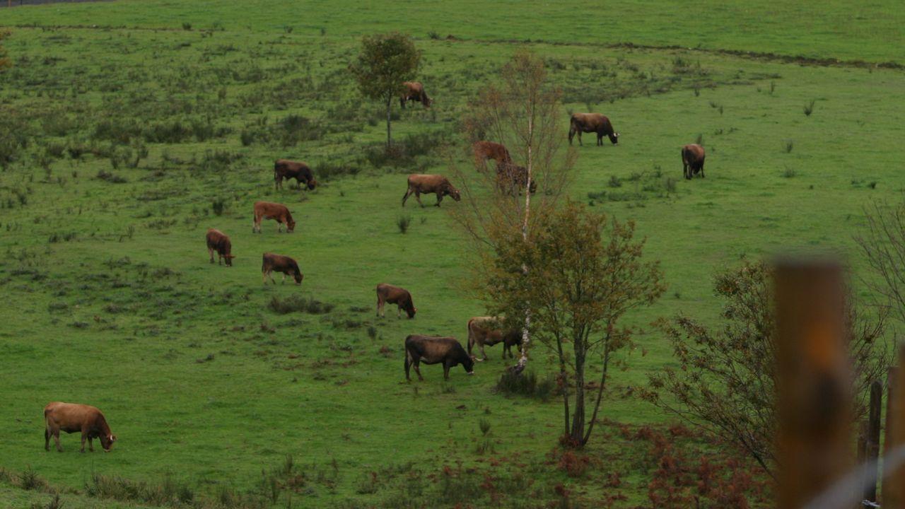 Centenaria de A Lama, Grou (Lobios), Segunda Portela Rodríguez