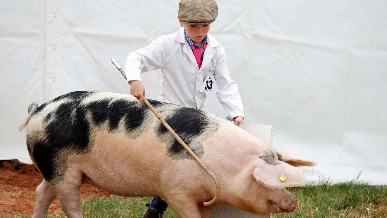 Un niño muestra un cerdo durante una competición en Reino Unido.