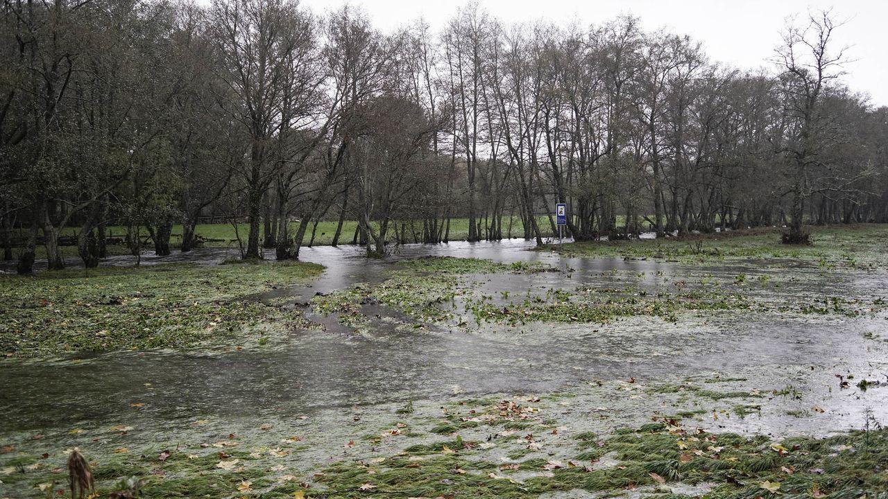 Así están los ríos a su paso por Ourense