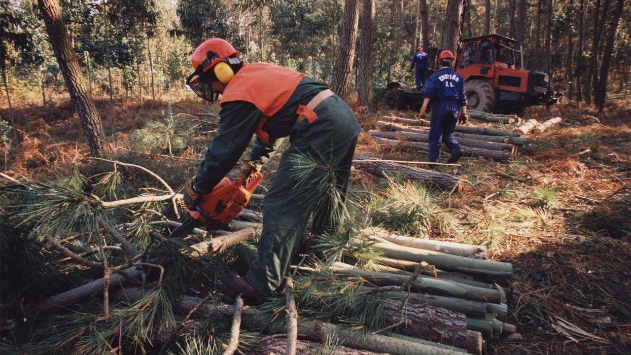 Muestras de madera que ha servido para entrenar a la nariz electrónica que detecta gasolina.Muestras de madera que ha servido para entrenar a la nariz electrónica que detecta gasolina