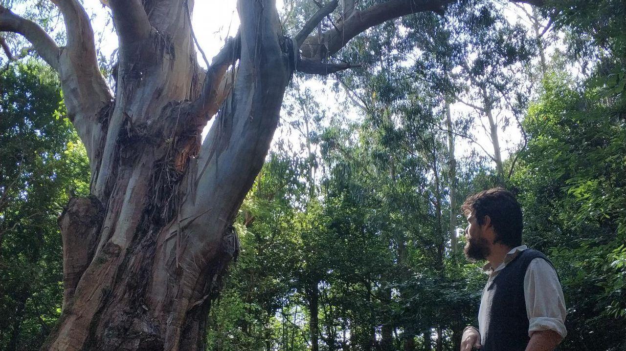 Crecida del río Tambre en Pontemaceira.Los eucaliptos rebrotan en una de las zonas arrasadas por los incendios del pasado octubre, Chandebrito