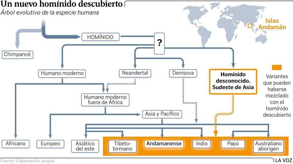 Árbol evolutivo de la evolución humana
